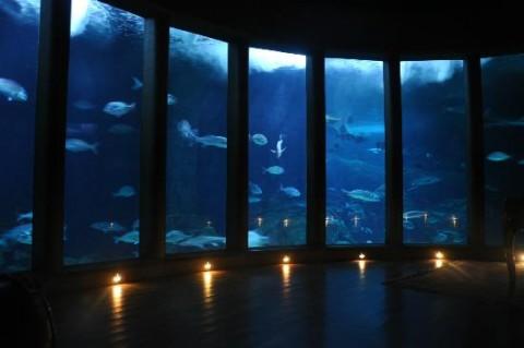 aquarium-finisterrae-divulgaccion